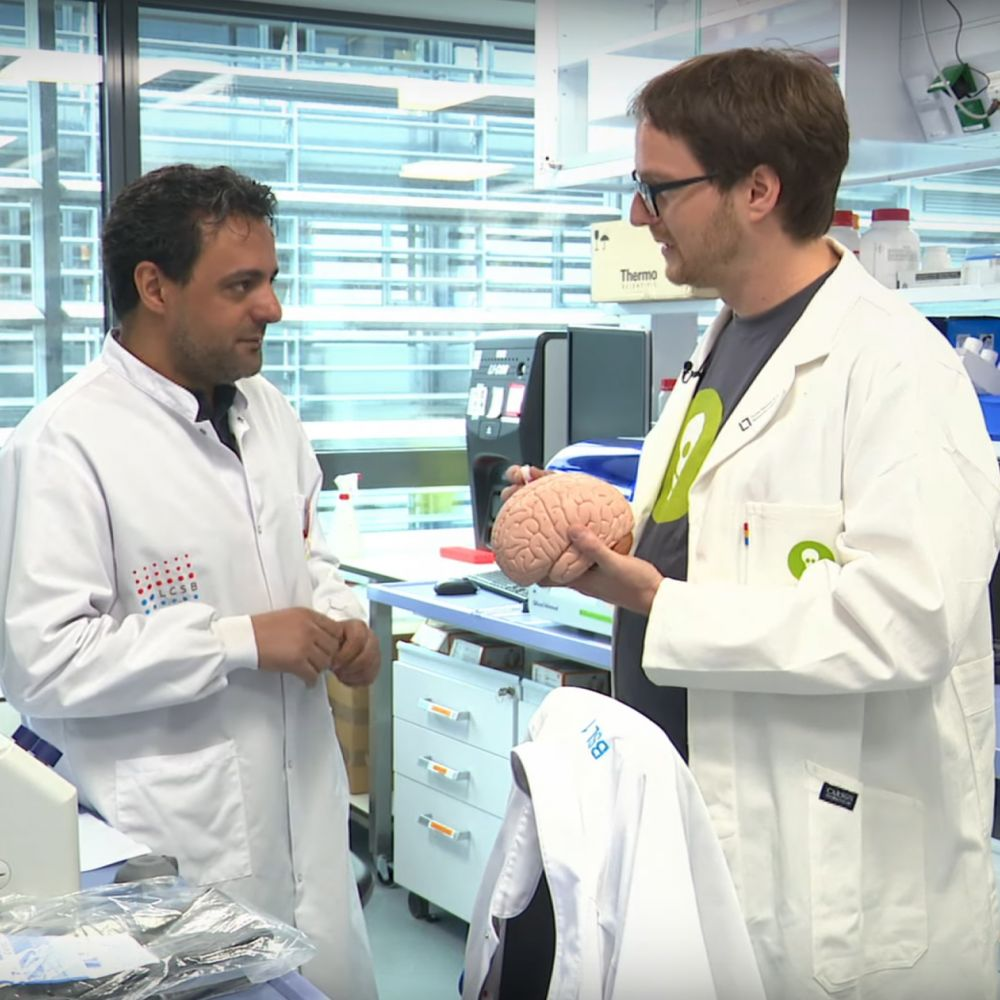 How do researchers use skin samples to study nerve cells?